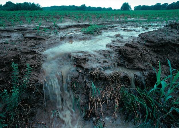 runoff_of_soil__fertilizer-wikimediacommons